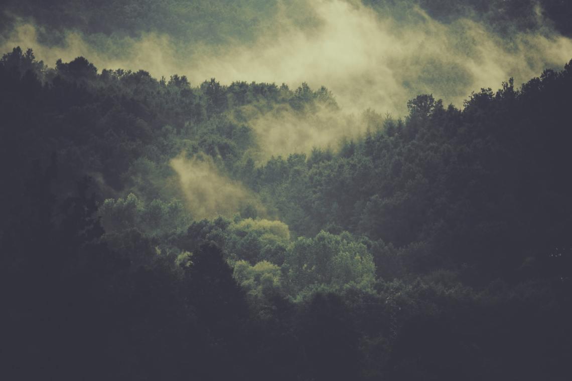 forestcarminedefazio